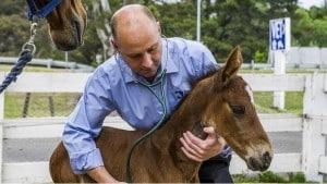 horse vet referral