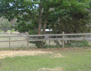 A suitable foaling paddock. Note the mesh netting  attached to the post and rail, to prevent the foal  from  slipping under the fence.